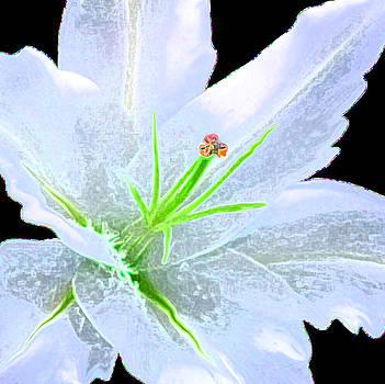 So Soft an White by John Johnson