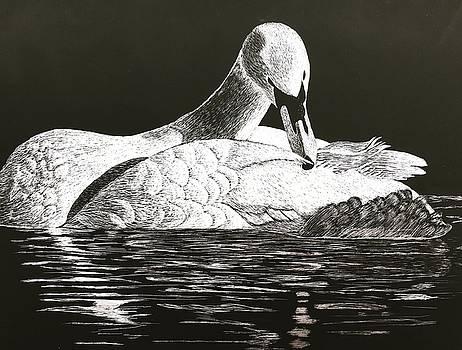 So Solo Swan by Brenda Brown