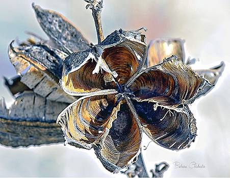 Soaptree Yucca Casing by Barbara Chichester
