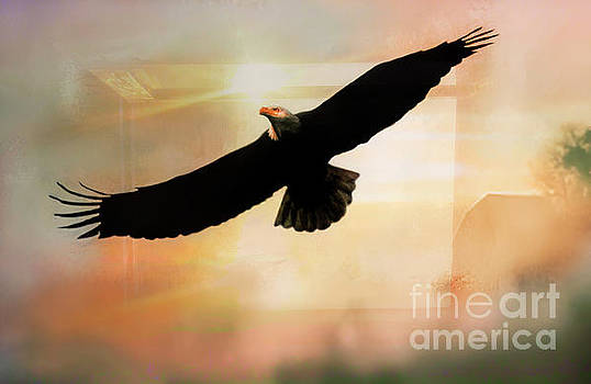 Soar High And Free by Janie Johnson
