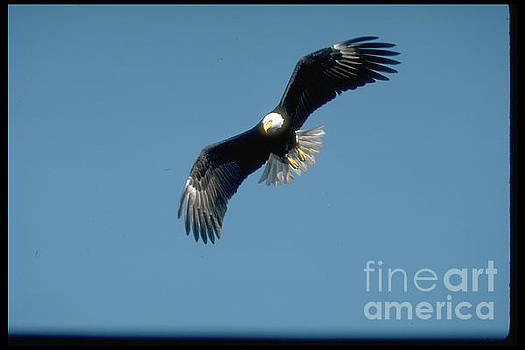 Soaring free, by Sandy Carey
