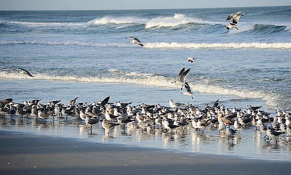 Patricia Twardzik - Soaring Gulls in the Surf