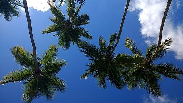 Soaring Palms by Sheryl Chapman Photography