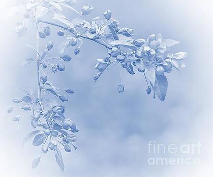 Andrea Kollo - Soft and Gentle