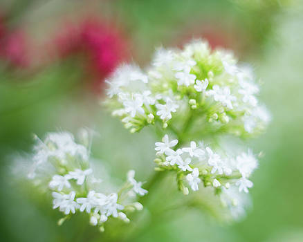 Soft and Gentle by Sarah-fiona Helme
