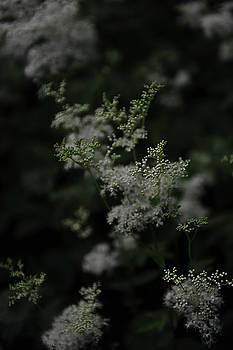 Soft as a Whisper by Randi Grace Nilsberg