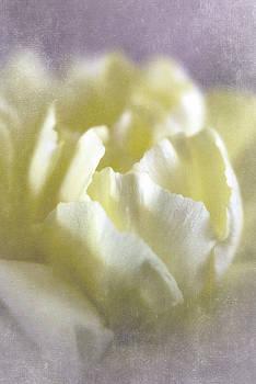 Soft Beauty by Jayne Gohr