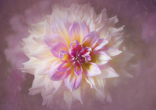 Soft Dahlia by Georgette Grossman