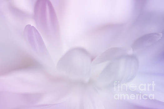 Soft Daisy Petals by LHJB Photography