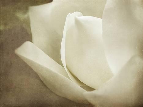 Soft Dreamy Magnolia Bloom Sepia by Melissa Bittinger