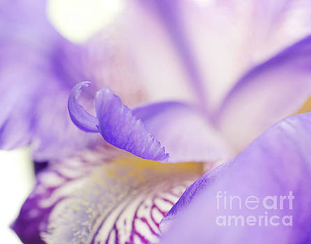 Soft Focus Iris Petals Nature Photograph by Melissa Fague