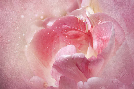 Soft Pink Tulips by Ann Lauwers