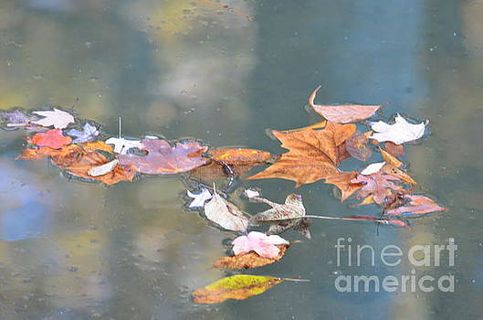 Maria Urso - Soft Reflections of Autumn