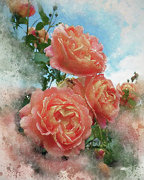 Soft Roses by Judi Saunders