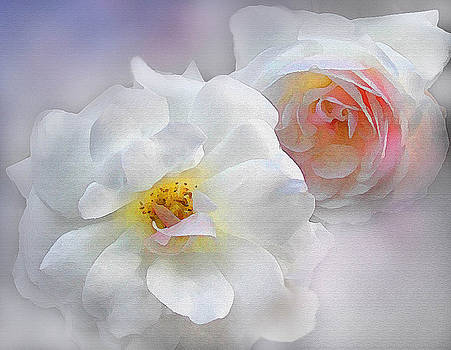 Soft Roses by Robert Foster
