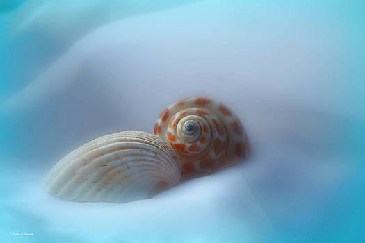 Linda Sannuti - Soft shells