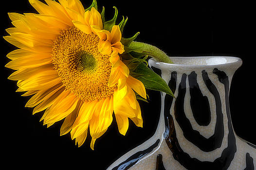 Soft Sunflower In Vase by Garry Gay