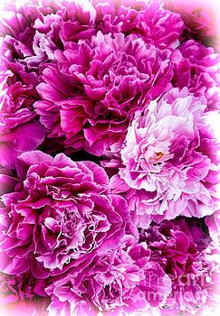 Barbara McMahon - Soft Sweet Pink Peonies