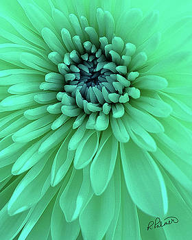 Soft Teal Petals by Ruth Palmer