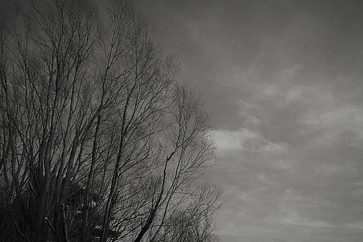 Soft tree line by Alex Leonard