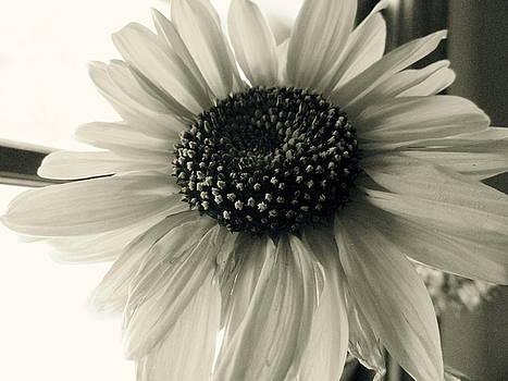 Soft White Light by Trish Hale