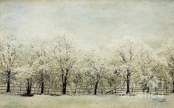 Softly Falling Snow by Chris Armytage