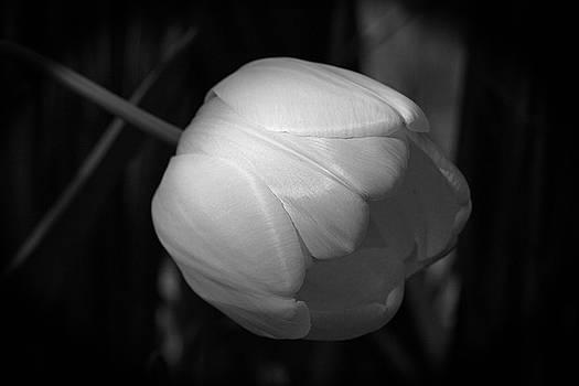 Softly by Jim Gillen