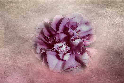 Softly Pink by Judy Hall-Folde