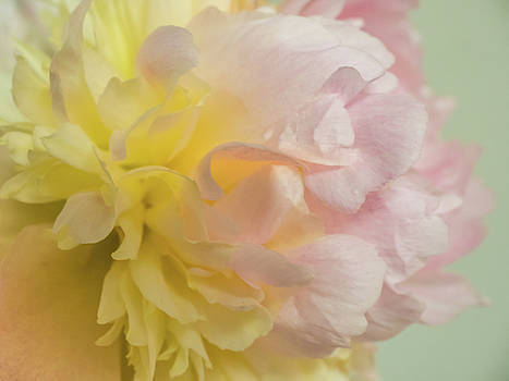 Softness And Light by Robin Zygelman