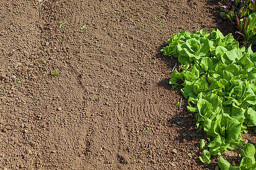 Soil And Chicory by Matjaz Preseren