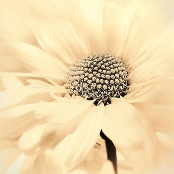 Soiree in Creamy Yellow by Darlene Kwiatkowski