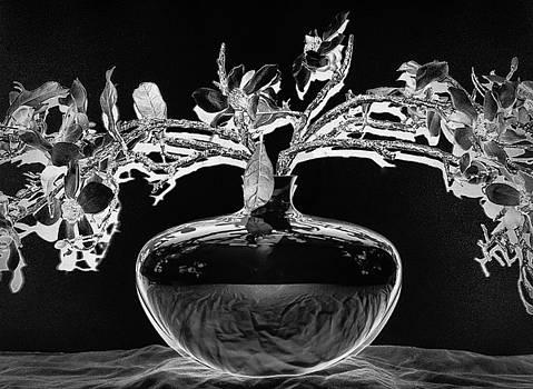 Solar Bonsai by Michael McCain