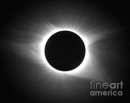 Solar Eclipse  by Jeff Lewis