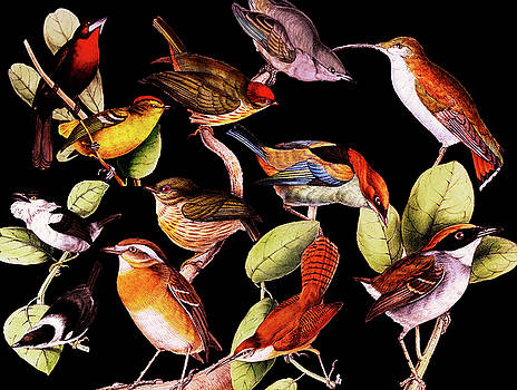 Solar Life Birds by Joseph Mosley