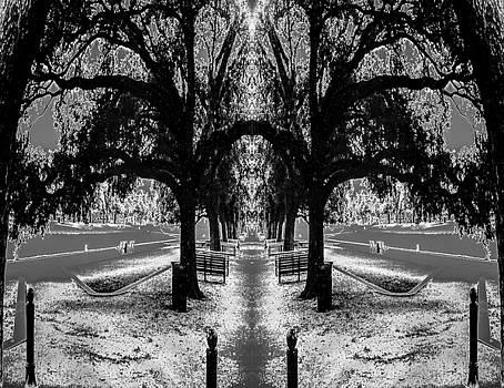 Solar Winter by Michael McCain