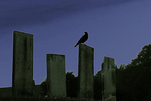 Solemn Visitor by Rochelle Kassens