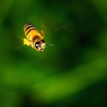 Bibi Rojas - Solitary Bee
