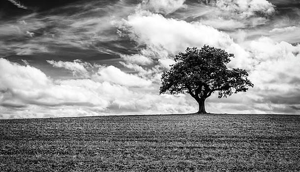 Majestic Oak by Nick Bywater