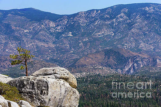 Solitary Pine on Promontory by Jeffrey Hubbard