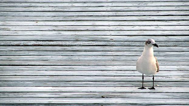 Nicole I Hamilton - Solitary Seagull