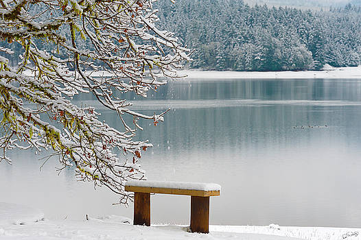 Solitary SnowScape by Dee Browning