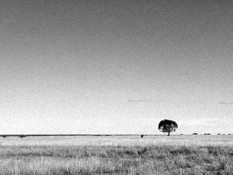Solitary tree  by Elizabeth McPhee