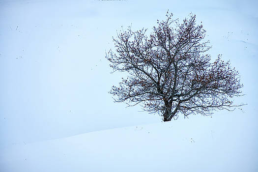 Solitary Tree in Snow by Rick Berk