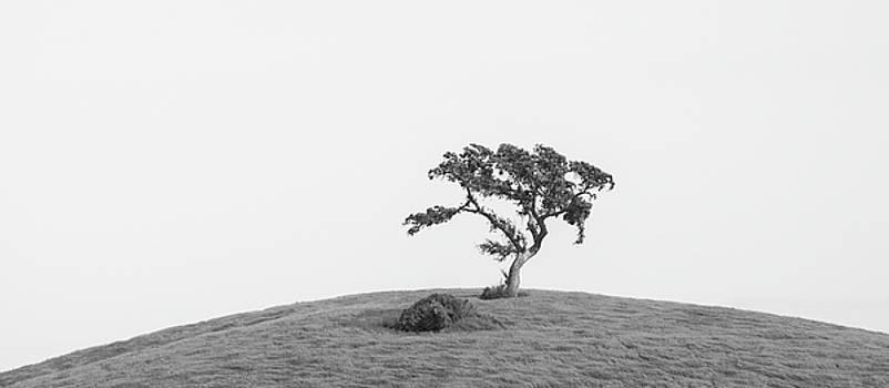Solitary Valley Oak by Alexander Kunz