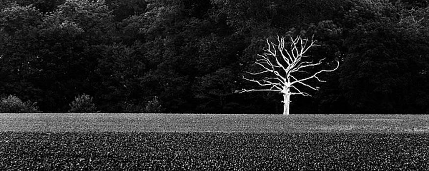 Solitude by Adrian Pollard