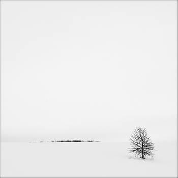 Solitude by Gary Harris