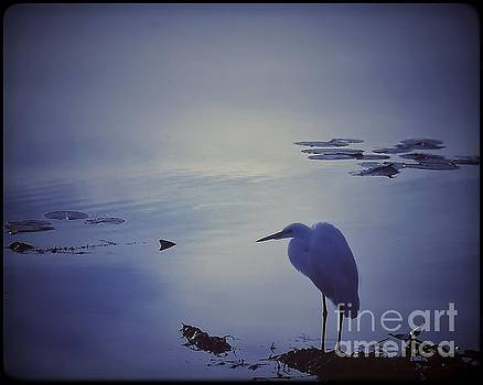 Solitude by John Eide