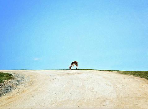 Solitude by Sue Collura