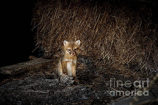 Kim Clune - Solo Fox Kit