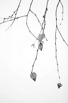 Solo by Rebecca Cozart